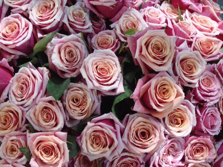 Emova Group mise sur les franchises pour développer Monceau Fleurs